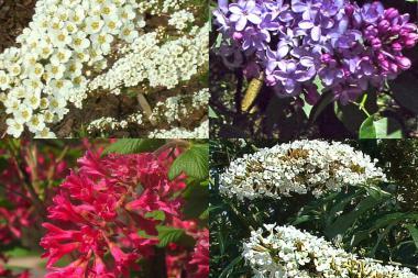 Häck till fjärilar och insekter