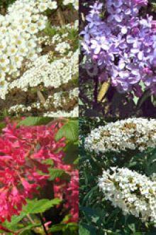 Häck till fjärilar och insekter kruka 30-60 cm