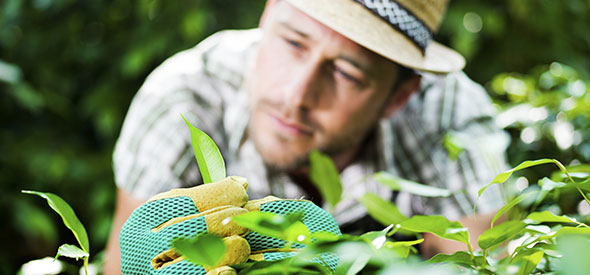 Häckplantornas kvalitet