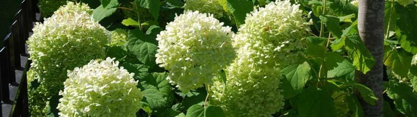 Blandande blommiga häckar