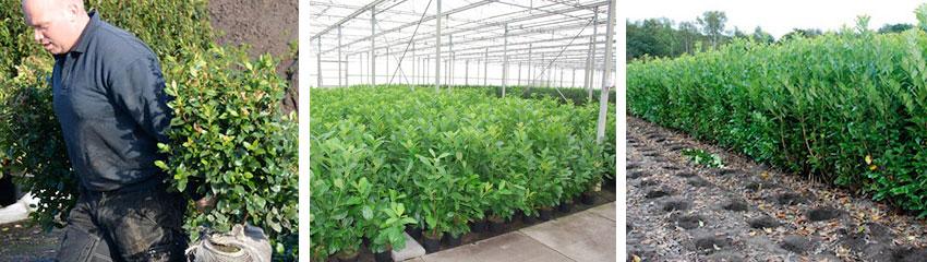 planten met kluit verzamelen