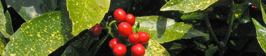 Häckplantor för den naturliga trädgården
