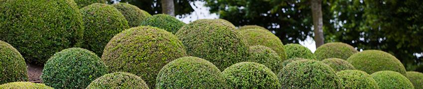 Häckväxter i alla former och storlekar