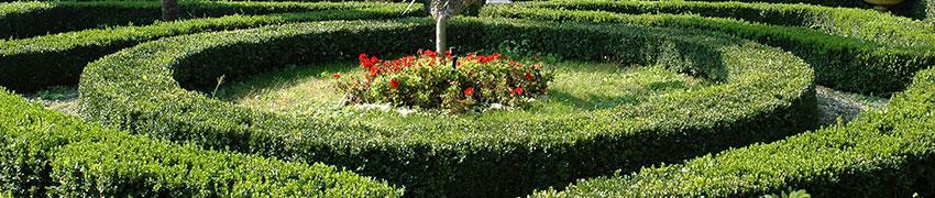 Häckväxter som trädgårdsväxt