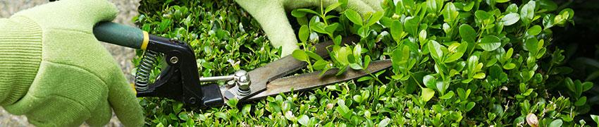 Planterings- och skötselsråd