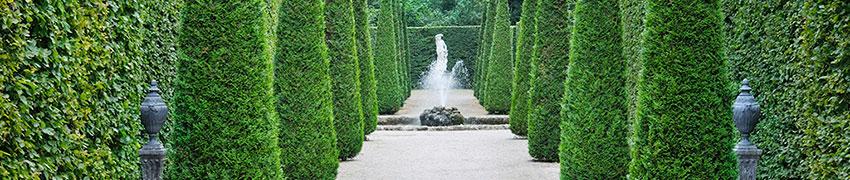 Städsegröna, vintergröna och lövfällande häckväxter